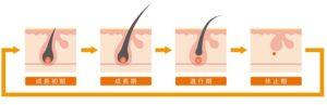 頭皮 ヘアサイクル1